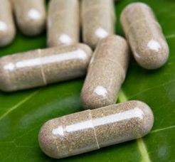 Hoodia diet pills