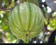 Garcinia Cambogia Extracr