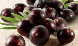 acai berry fruit